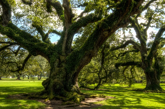Oak has roburins that can fight Chronic Fatigue Syndrome